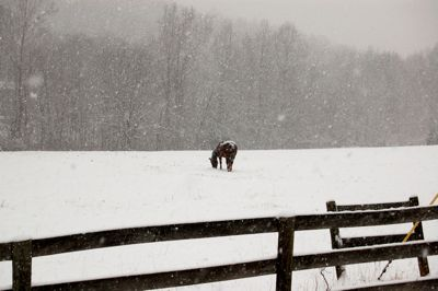 Hores in Snow Rodes Farm