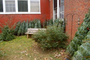 Nelson: Grinch Visits Rockfish Valley Community Center – Christmas Trees Stolen