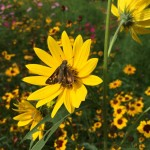 Nelson / Afton: Mallory Creek Native Grasses & Wildflower Meadow Opens At RVCC