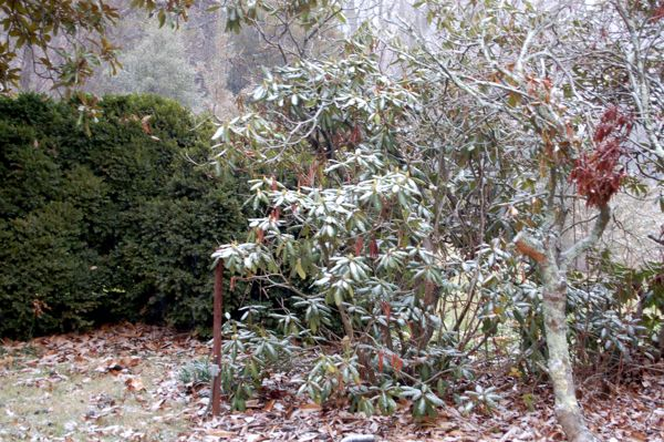Light Snow Begins Falling In Nelson, Numerous Accidents Across Area