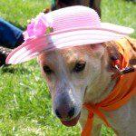 Easter Parade KIcks Off Season At MountainSide Petting Farm In Afton : 4.12.09
