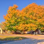 Brilliant Fall Colors