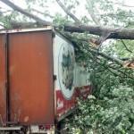 Severe Thunderstorms Cause Moderate Power Line & Tree Damage Across Area