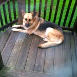 Nelson: Afton / Greenfield : Missing Pet - Located :  Update - Out Of Surgery