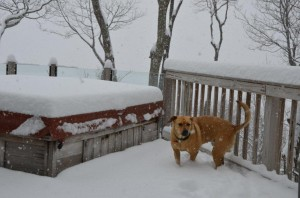 """Photo By John Taylor : Upon Devils Knob and other areas of Wintergreen as much as 8"""" of snow was reported by the time the snow ended late Tuesday."""