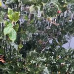 Nelson : Wintergreen : A Bit Of Ice Up Top