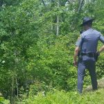 Blue Ridge Parkway : Minor Injuries After Vehicle Goes Off Parkway Near MP 22