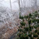 Cold Rain Down Below - Icy Up Top!