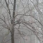 Nelson: Wintergreen : December Begins With Rain Down Below Ice Up Top